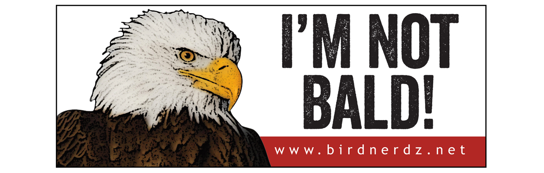 Slider Image2-bald eagle bumper sticker