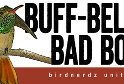Buff-bellied Bad Boy bumper sticker 8x3 FLAT 450x