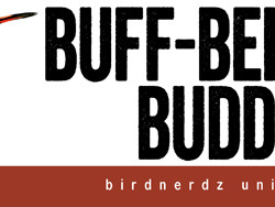 Buff-bellied Buddy bumper sticker 8x3 FLAT 500px