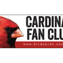 Cardinal Fan Club 3x8 bumper sticker 750x505