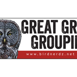 Great Gray Groupie 3x8 bumper sticker 750x505