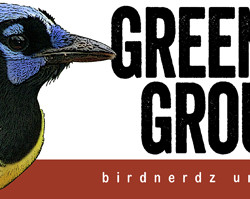 Green Jay Groupie bumper sticker 8x3 FLAT 530px