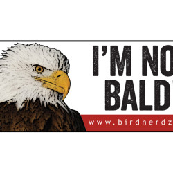 I'm Not Bald! Bald Eagle 3x8 bumper sticker 750x505