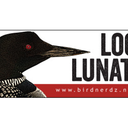 Loon Lunatic Common Loon 3x8 bumper sticker 750x505