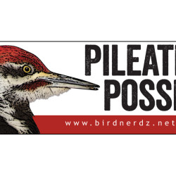 Pileated Posse 3x8 bumper sticker 750x505