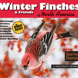 Winter Finches cover screen capture