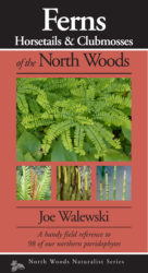 Cover Ferns North Woods front only